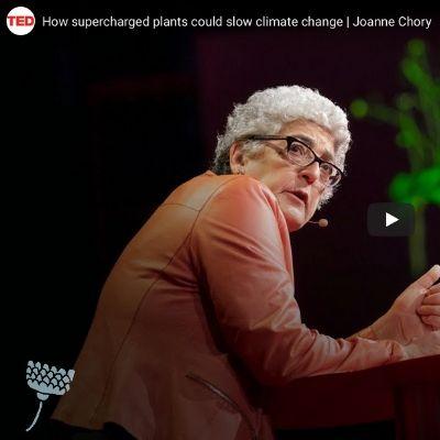 Joanne Chory TedTalk